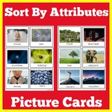 Sorting by Attributes Kindergarten