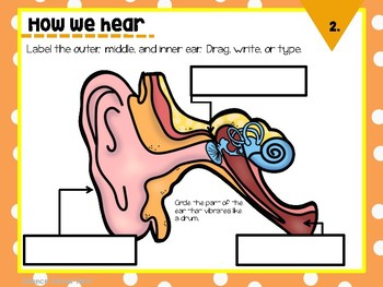 Sound Digital Interactive Activities for Ipad and Google Drive