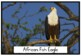 South African Bird Picture Posters