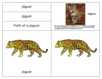 South America: Parts of a Jaguar