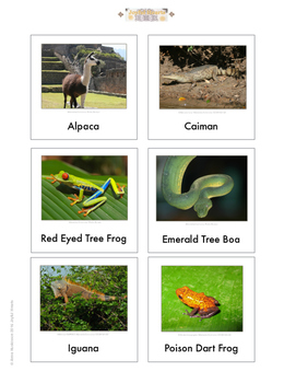 Continent Animal Cards, South America