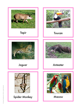 Continent Animal Cards, South America (colored border)