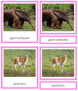 South American Animals: 3-Part Cards (color borders)