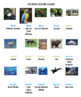 South American Animals Concentration