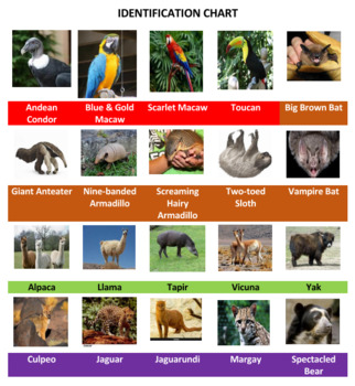 South American Animals Crossword Puzzles