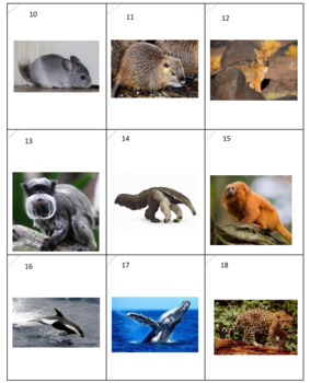South American Animals Dominoes