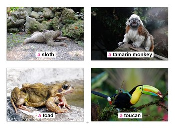South American Animals Flashcards with Vocabulary