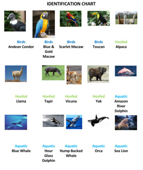 South American Animals Jigsaw Puzzle