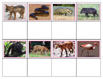 South American Animals: Mini Matching Cards