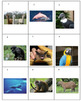 South American Animals Photo Safari Game