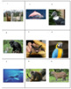 South American Animals Sort Game