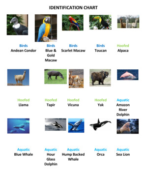 South American Animals Tic Tac Know