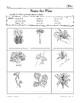South American Plants & Animals