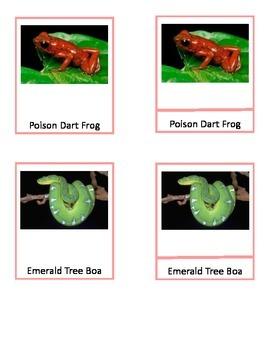 South American Wildlife - Montessori 3 part cards