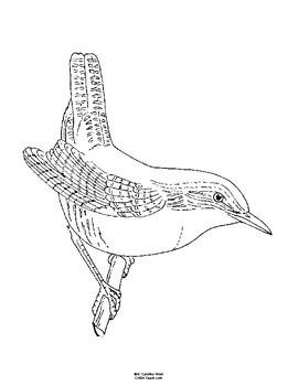 South Carolina State Bird Notebooking Set (Carolina Wren)