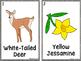 South Carolina Symbols Write The Room