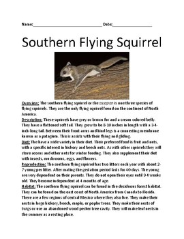 Southern Flying Squirrel - lesson facts information review questions