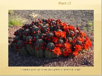 Desert Plants Dichotomous Key / Task Cards Bundle