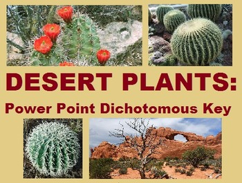 Desert Plants Dichotomous Key Task Cards Bundle By Mizzz Foster