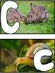 Spanish Alphabet Play-Doh Photo Cards
