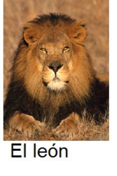 Spanish: Animal Flashcards