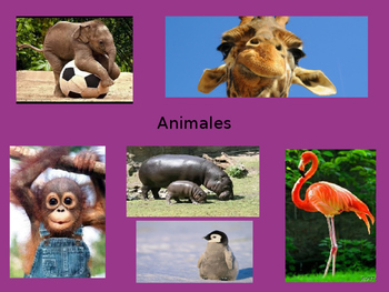 Spanish Animals PowerPoint