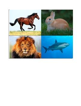 Spanish Animals with Photos