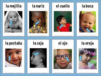 Spanish Body Flashcards and Word Wall