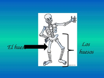 Spanish Body Parts- Body Parts Powerpoint