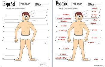Spanish Body Parts Diagram to Label with 20 Body Parts