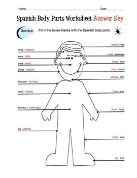 Spanish Body Parts Label Worksheet & Answer Key