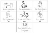 Spanish Body Parts Practice Pages Bundle