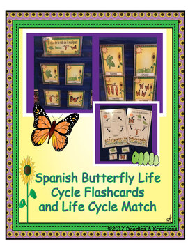 Spanish Butterfly Life Cycle Flashcards and Life Cycle Match