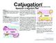 Spanish Catjugation: Verb Conjugation Irregulars Set