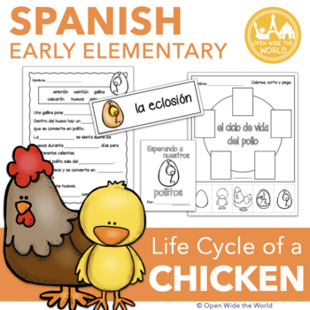 Spanish Dual Language Life Cycle of a Chicken el ciclo de vida del pollo