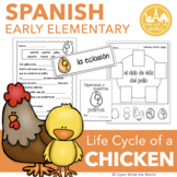 Spanish Dual Language Life Cycle of a Chicken el ciclo de