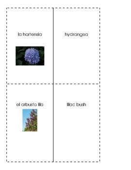 Spanish English Flashcards - Las plantas / Plants