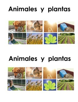 Spanish Guided Reading Book - Animales y plantas