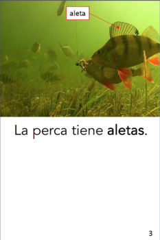 Spanish Guided Reading (seven books) - Los peces