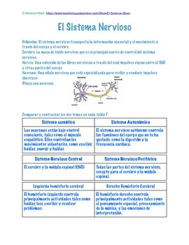 Spanish Human Body Notebook-Answer/Teacher edition complete unit