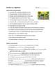 Spanish Imperfect Tense Comprehensible Input Worksheet