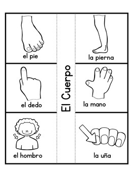 Spanish Interactive Notebook-Body-El Cuerpo