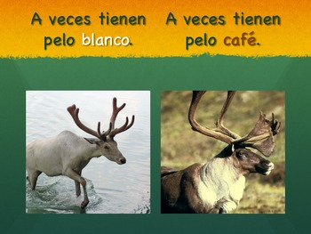 Spanish Los Renos Basic Information PDF