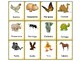 Spanish Memory Game: The Animals - Los Animales