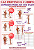 Spanish Parts of the Body Charts - Las Partes del Cuerpo Humano