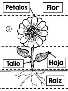 Spanish Parts of the plant Interactive Notebook Activity