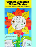 Spanish Plant Activity: The Life Cycle of a Sunflower Science Craft
