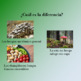 """Spanish Powerpoint for the short story """"La Micología"""" by Q"""