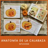 Spanish Pumpkin Anatomy/Póster Anatomía de Calabaza