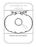 Spanish Pumpkin Investigation (Investigando una calabaza) K-2